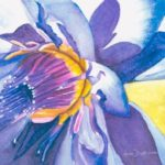 redland yurara art society - flowers art exhibition - february 2020 - painting - 'Blue Lotus' by Lynn Dickinson