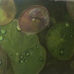 redland yurara art society - autumn exhibition - leaves - 'Hiding Place'- Gillian Goldsworthy - Pastel -pond - lillypads