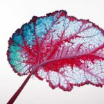 redland yurara art society - autumn exhibition - leaves - painting - 'Leaf'- Lisa De Leon - Acrylic on Canvas
