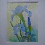 redland yurara art society - art exhibition - 'Out of the Blue' - Danielle Bain - Watercolour - Framed - dutch irises - flower painting
