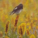 Redland Yurara Art Society - 'Black Robin' -Jacqui Selke-Pike - Pastel - Painting - Art Exhibition - Major Spring Art Exhibition