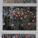 redland yurara art society - yurara youth art awards - YYAA 2020 - art exhibition - art competition - 'Mangrove Flowers' -Evie Sprite - Cleveland District State High School -Photograph
