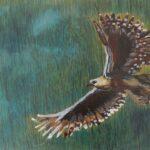 redland yurara art society - yurara youth art awards - YYAA 2020 - art exhibition - art competition - 'Skyward Soar' - Dan Hill - Cleveland District State High School - Acrylic - Ink - Print