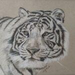 Redland Yurara Art Society - 'Tiger' - Mary Jane Turk - Drawing - Art Exhibition - Major Spring Art Exhibition