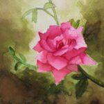 redland yurara art society - yurara youth art awards - YYAA 2020 - art exhibition - art competition - 'Wild Rose' - Monir Aylifee - Cleveland District State High School - Watercolor