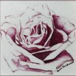 Redland Yurara Art Society - 'Rose Blush' - Lynn Dickinson - Watercolour - Painting - Art Exhibition - Florals
