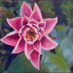 Redland Yurara Art Society - 'Waterlily Pink' - Danielle Bain - Pastel - Framed - Painting - Art Exhibition - Florals